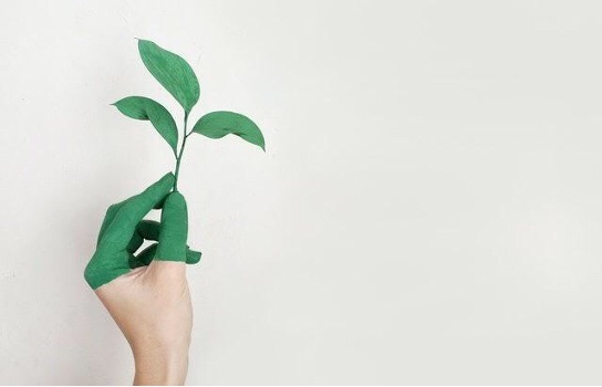 Can Luxury Homes Be Environmentally Friendly Too?